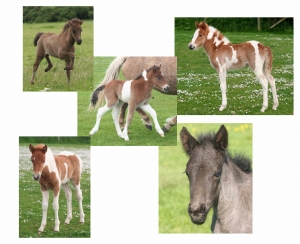 foalsgroup