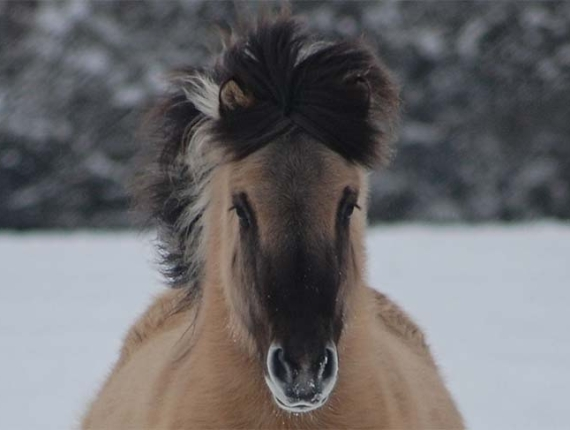 Winter horse snow