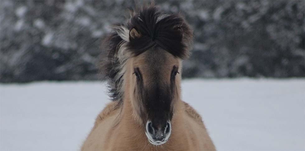 Winter horse snow